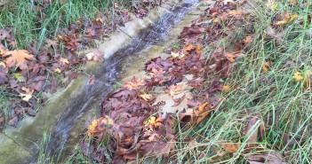 Vegetation established around the concrete cloth drainage ditch. No erosion has occurred.