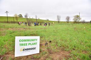 Forests Ontario Enbridge Tree Planting