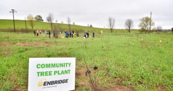 Forests Ontario Enbridge Tree Planting
