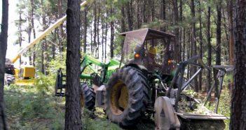 Ramirez Tree Service, Henderson County, Texas